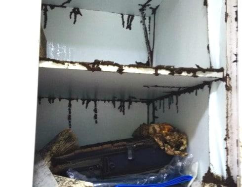 cheap termite treatment singapore
