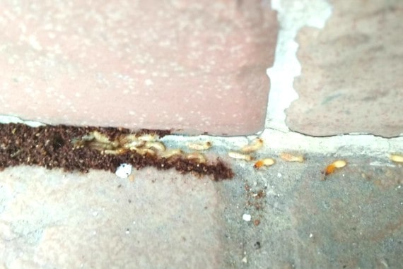 termite company singapore