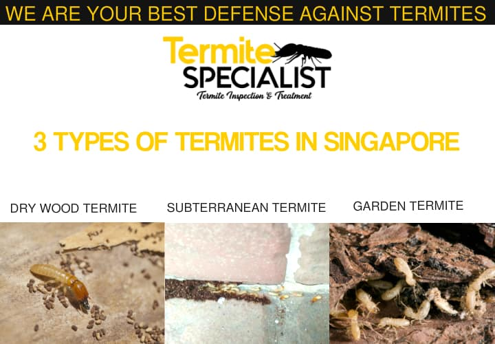 3 Types oF termites In Singapore