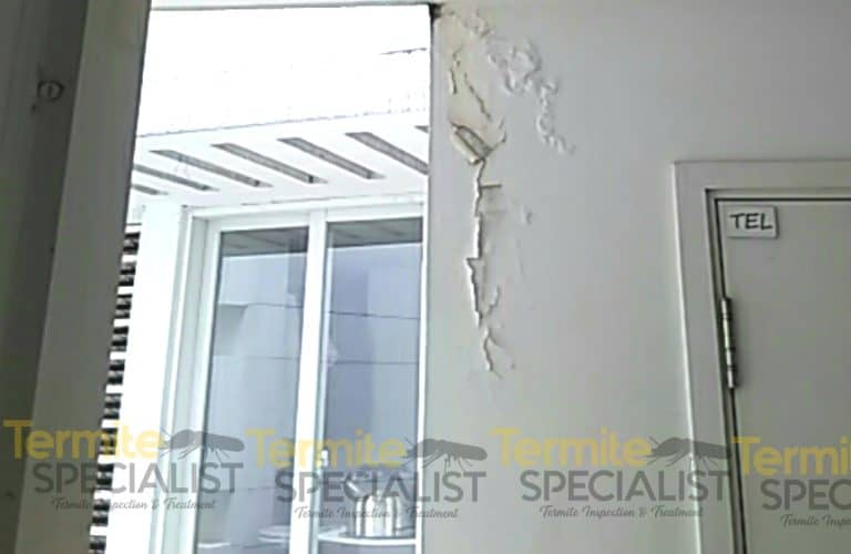 Termite Inspection Singapore