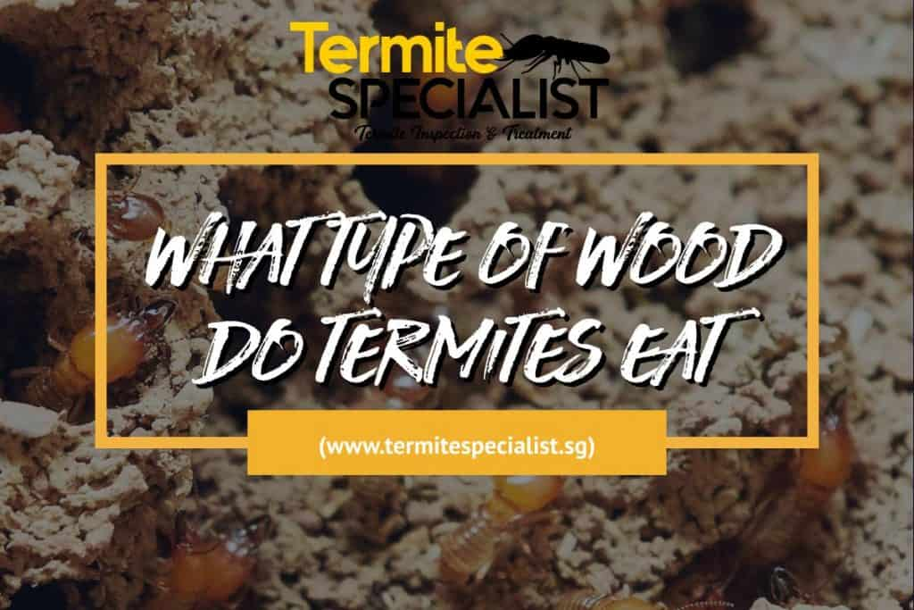 Type Of Wood Do Termites Eat