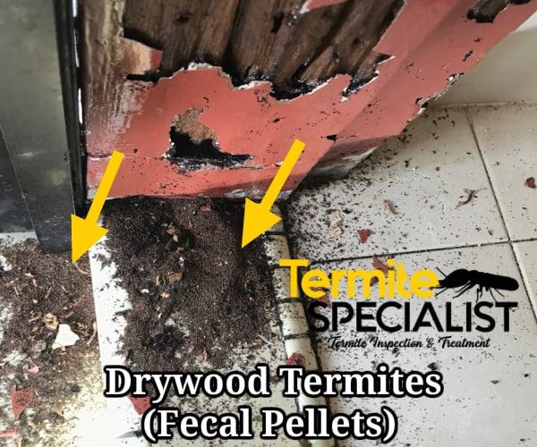 Drywood termite singapore