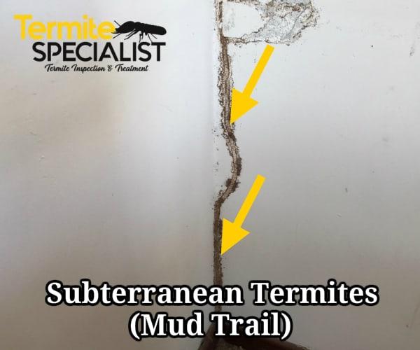 Signs of subterranean termites