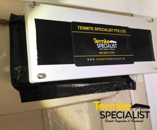 Termite treatment Singapore