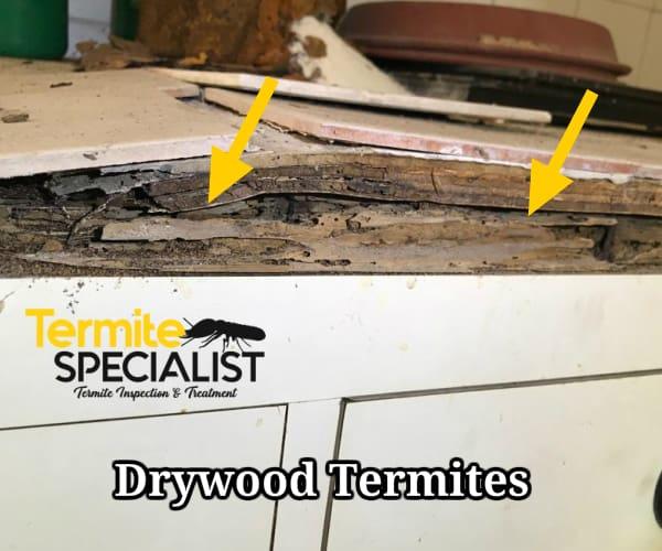 Termite Treatment In Singapore, Home