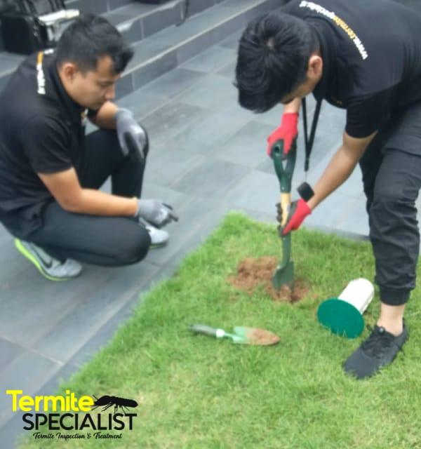 Termite Specialist Singapore