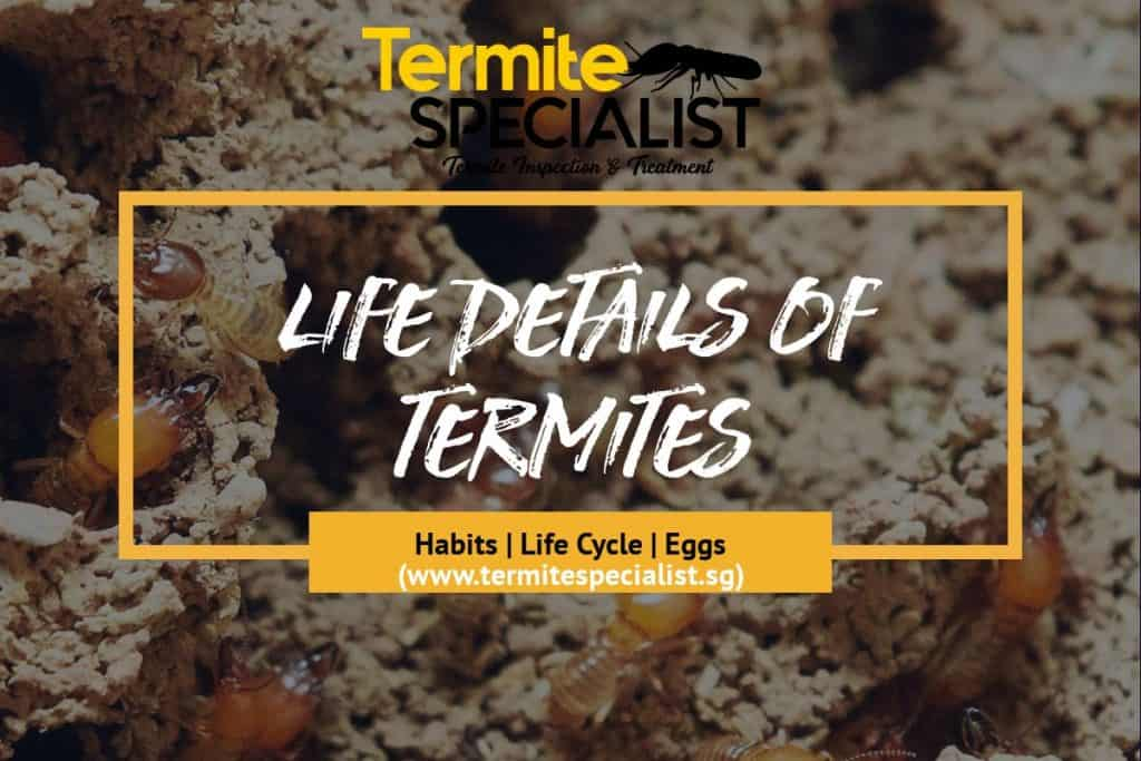 Life Details of termites